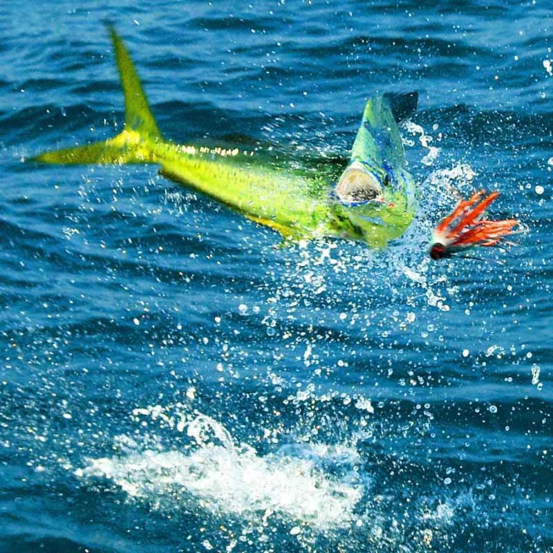 Location san carlos mexico for San carlos mexico fishing